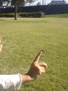 指にとまったトンボ